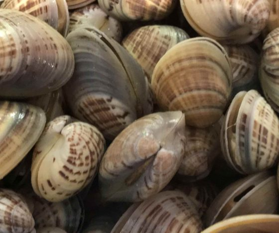A selection of Fresh Clams.